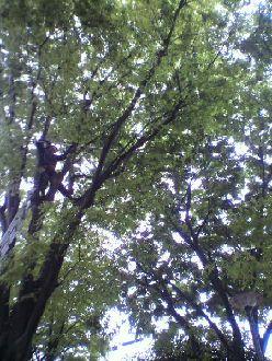 2012.05.07.カラス.jpg
