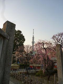 2013.02.27.亀戸天神.jpg