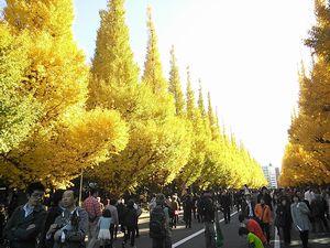 2013.11.25.いちょう並木.jpg