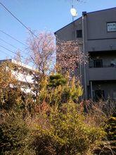 2013.12.25.08.jpg