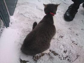 2014.02.14.雪2.jpg
